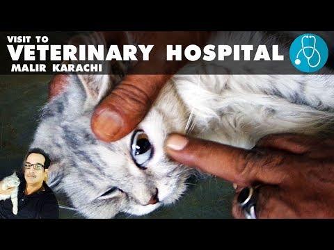 Veterinary Hospital visit in Malir Karachi   Kanoo the CAT is Sick   Video in URDU/HINDI