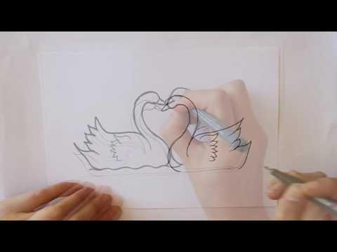 Cómo Dibujar Dos Cisnes Con Un Corazón Dibuja Conmigo Dibujos De Animales