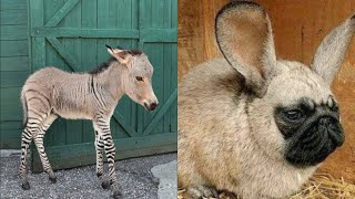 15 Amazing Hybrid Animals That Actually Exist