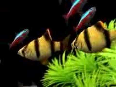 Dream aquarium aqu rio virtual youtube - Dream aquarium virtual fishtank 1 ...