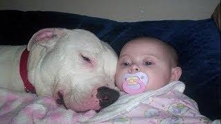 Kind mit Pitbull alleine gelassen. Als die Eltern zurückkommen, ist das Drama groß!