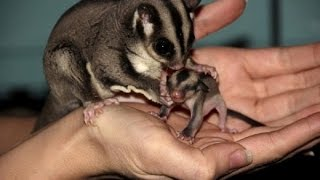 8(965)380-13-11  | Животный мир австралии видео(8(965)380-13-11 Выездной театр