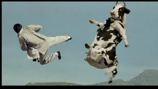 Brusli and cow fight | बरूसली और गाय की लडाई |  cow fight | cow and chainis man fight