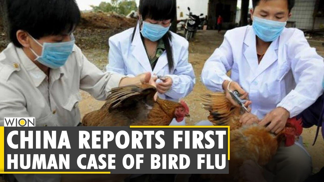 China finds possible first human case of H10N3 bird flu strain