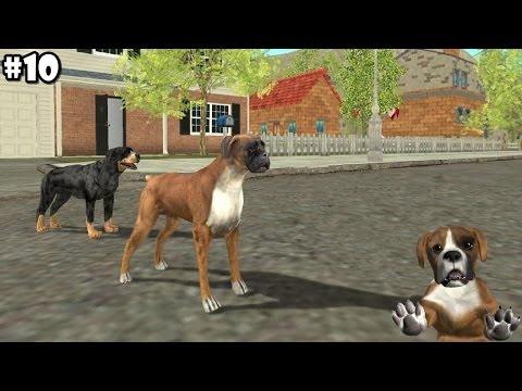 Dog Sim Online - Boxer And Rottweiler - Android / IOS - Gameplay Part 10