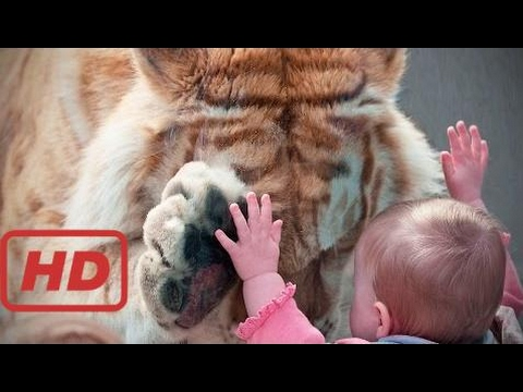 Zoo Animals Attacks 🐆 Wild Animals Don't Know What Glass Is [TNT Channel]  #AUM
