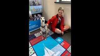 A Day with Louie the whippet, Therapy Dog at work at CatZero