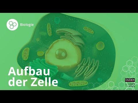Aufbau der Zelle: Bio leicht gemacht! – Biologie | Duden Learnattack