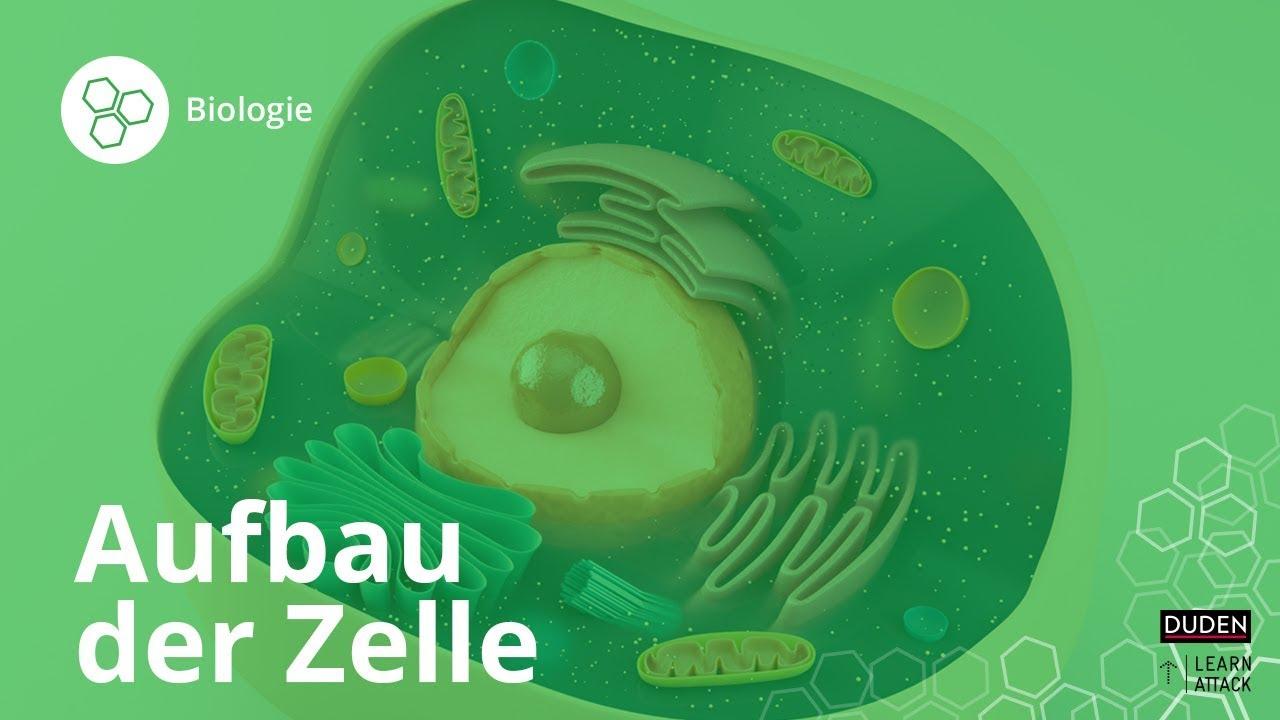 Aufbau der Zelle: Bio leicht gemacht! – Biologie | Duden Learnattack ...