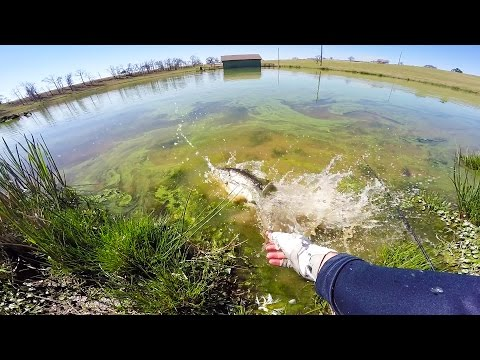 Pond bass fishing in the green slime..