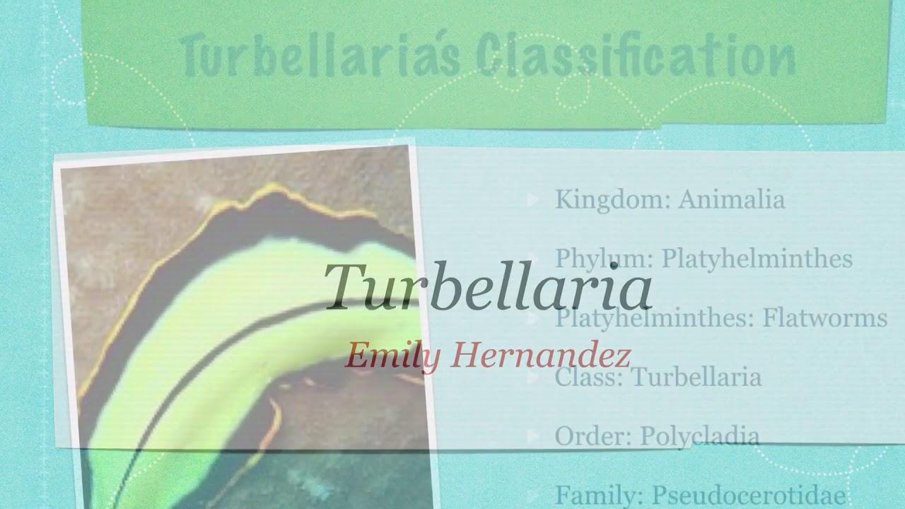 Capsule parazite, Proprietățile platyhelminthes turbellaria