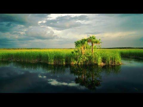 Florida Everglades 4K 2017