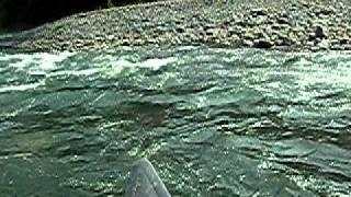 2010年8月22日 富士川 畠山~蓬莱橋 -5.6m デビ.