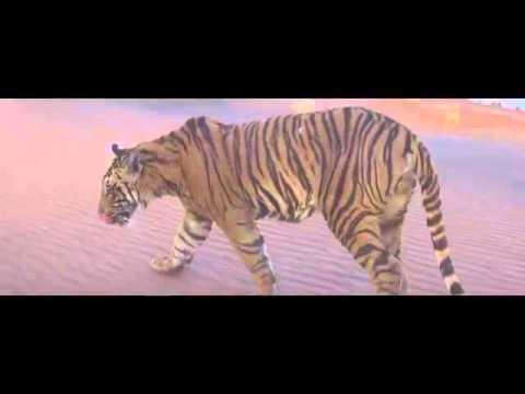 Paranday Full Video   Bilal Saeed   Latest...