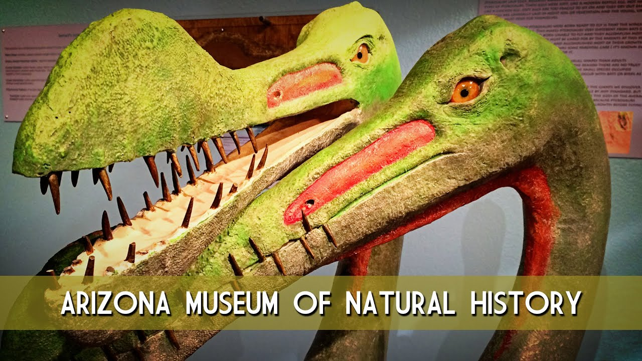 Arizona Museum of Natural History - YouTube