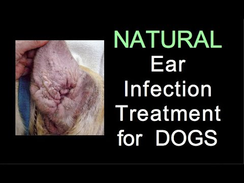 Natural Ear Infection Treatment for Dogs  raw diet/colloidal silver