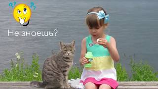 Смотреть видео Кот Бисквит и девочка ★ Афиша Event-map.ru онлайн