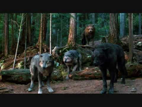 Quileute Wolf Pack Youtube