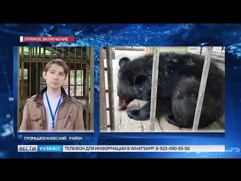Стала известна дальнейшая судьба гималайского медведя из Кузбасса