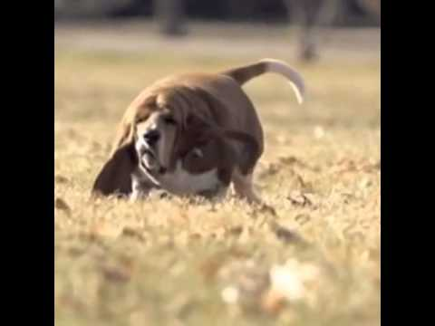 Animal Vines 90 | Fat dog in slow motion