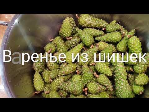 Варенье из сосновых шишек. Легкий рецепт)
