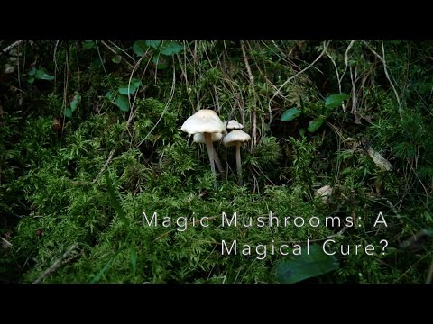 Magic Mushrooms: A Magical Cure For Depression?