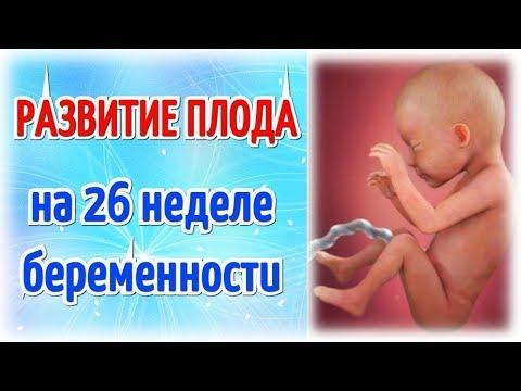 Развитие плода на 26 неделе беременности!