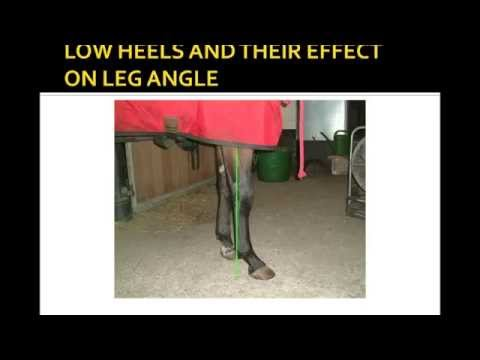 Online Hoof-Care Classrooms: Shoeing Reiners: Focusing on the Front Feet