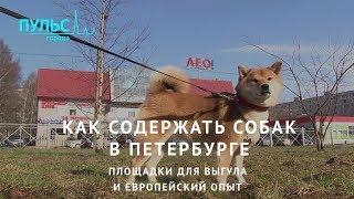 Как содержать собак в Петербурге. Площадки для выгула и европейский опыт