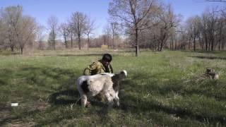 видео Уход за питомцем – защита от паразитов народными средствами
