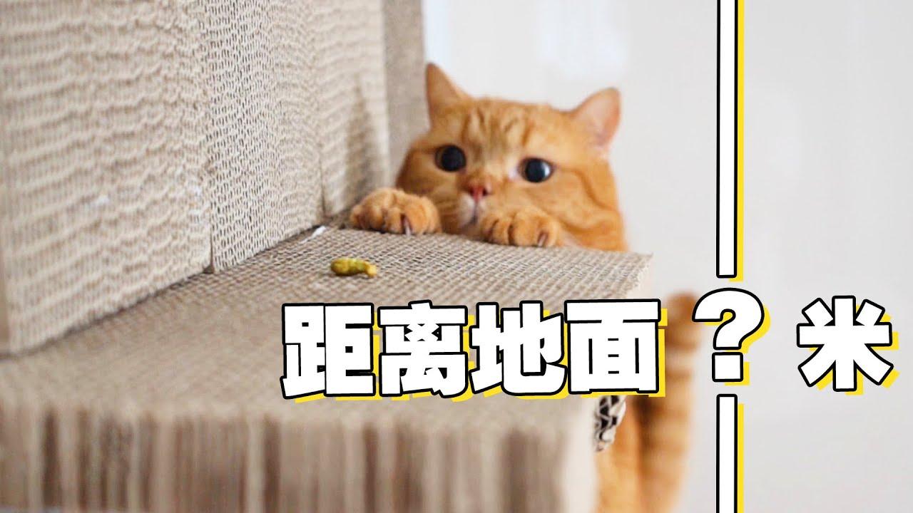 【喵来啦】2020猫咪奥运会,刷新攀岩新高度,下落瞬间心脏骤停!