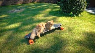 SKATER CAT!