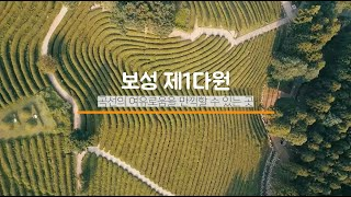 랜선 보성여행 #1. 보성차밭 안내