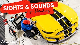 The Sights & Sounds Of A Mustang GT350 Detail! Satisfying Auto Detailing!