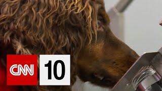 Can Dogs 'Sniff Out' Covid-19?