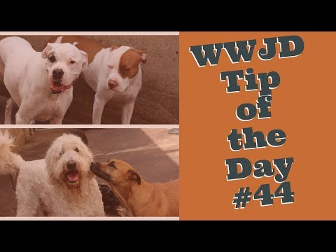 What Would Jeff Do? Dog Training Tip of the Day #43 Bark Collars