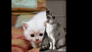 Милые котята, кошки фото