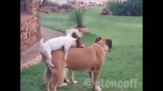 Собаки ебуться.