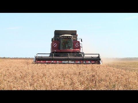 Иловлинские аграрии делают ставку на нут