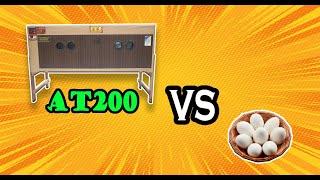AT 200 vs Telur Itik
