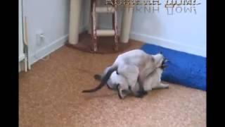 Коты делают трах под музыку! Прикольно!