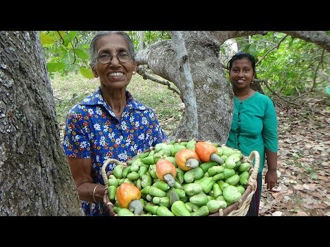 Cashew Nut Curry ❤ Healthy Village Food by Grandma and Daughter | Village Life