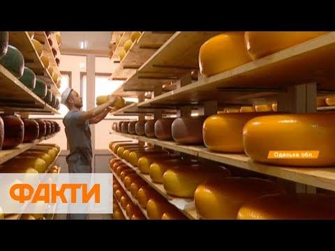 Голландский сыр украинского производства: как изготавливают и цена