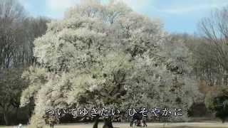 夏木綾子 - 淡墨桜