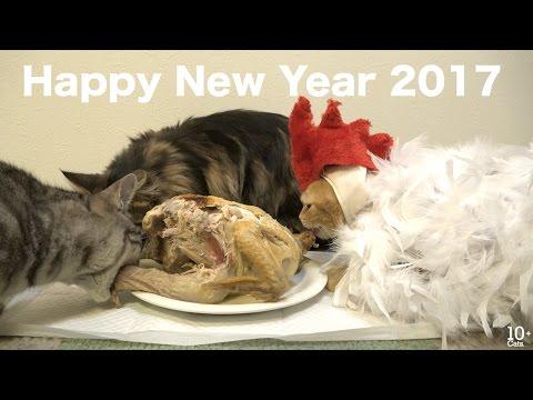 Cat + Rooster.  2017年の干支、酉になった猫のまる