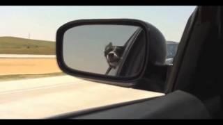 Собака ругается матом ( прикол) популярное видео youtube