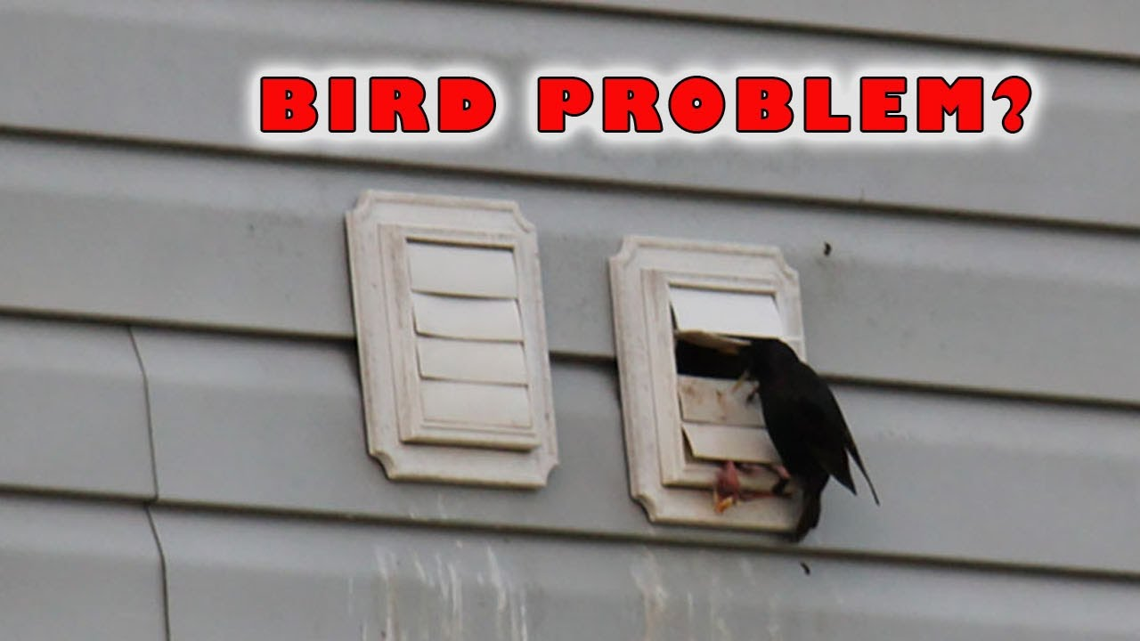 Dryer Vent Bird Guard Stop Bird Nesting Dryer Vent Youtube