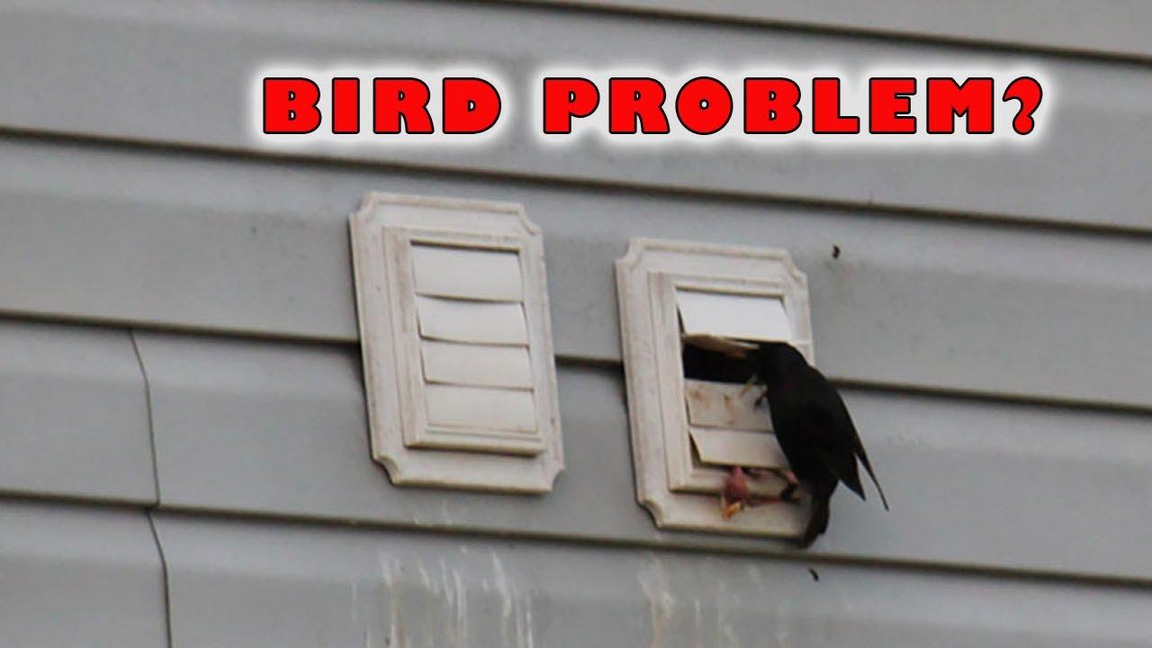 Dryer vent bird guard stop nesting youtube