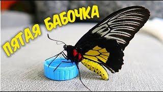Бабочкариум! Пятая бабочка, Птицекрылка! Бабочкарий. alex boyko