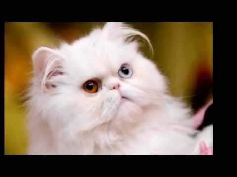 Top 50 cute and fluffy dog cat 2015